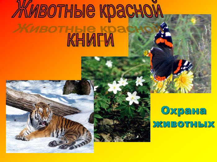 Животные красной книги презентация скачать бесплатно